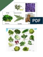 Plantas Medicinales y Alimenticias