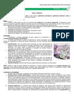 Medresumos Histologia :Pele e Anexos