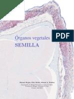 organos vegetales.semilla