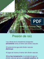 Transporte en Xilema y Floema.pptx