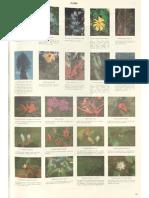 National Atlas - Flora