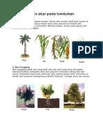 akar pada tumbuhan.docx