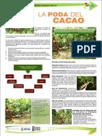 poda de Cacao