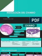 Histología Del Ovario