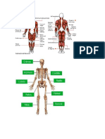 anatomia-sistema oseo y muscular.docx