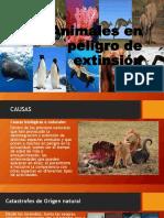 Animales en Peligro de Extinsión