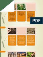 TERMINOLOGIA-AGRICOLA.pptx