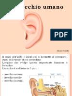 ORECCHIO.pdf