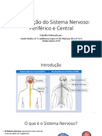 Constituição Do Sistema Nervoso Periférico e Central