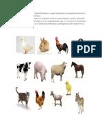 Animales Domesticos Con Pequeña Definicion