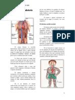 El aparato circulatorio revista.docx