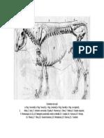 docslide.net_schelet-bovine.doc