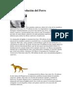 CsOrigen y Evolucion Del Perro