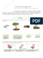 Ciclo de vida de una planta con flor