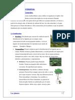 244647138 Reino Vegetal PDF