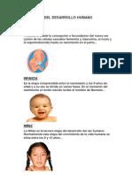 LAS 7 ETAPAS DEL DESARROLLO HUMANO.docx