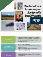 epidemiologia bartonelosis