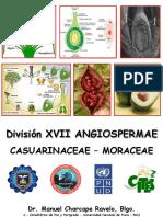 003 Angiospermae - Moraceae