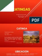 CATINGAS-AVANZADAjct