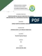 Informe Identificación de Plantas Forestales en La Universidad