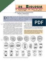 MITOSE E MEIOSE.pdf