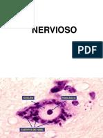 Muscular y Nervioso