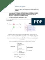 resumen-REACCION-DE-OXIDACION-DE-LOS-LIPIDOS.docx