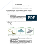 LOS PROTOZOARIOS.docx