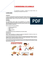 PICADURAS Y MORDEDURAS DE ANIMALES.docx