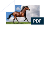caballo.docx