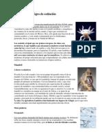 Animales en peligro de extincións.docx