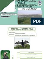 Presentacion_Avifauna2