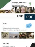 Fisiologia Veterinária do Olfato