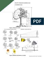 Evaluación de árboles en pie3.docx