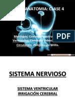 Sistema Ventricular y Circulación