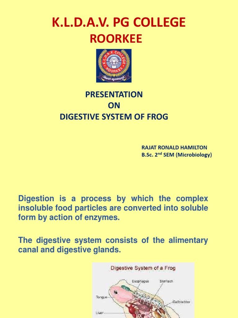 digestive system of frog-converted.pdf | Digestion | Stomach | Avaliação  gratuita de 30 dias | Scribd