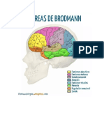 AREAS DE BRODMANN.docx