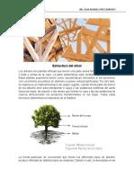 Estructura Del Árbol