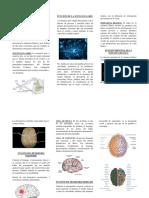 CONEXIONES INTERHEMISFÉRICAS.docx