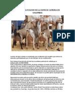 CRÍA Y EXPLOTACION DE LA ESPECIE CAPRINA EN COLOMBIA.docx