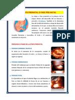 La Etapa Prenatal o Fase Pre