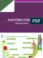 Anatomìa Humana 2