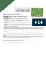 Plastid.pdf