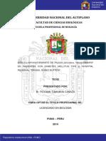 CANAZA_CAHUANA_ROXANA.pdf