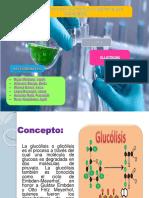 glucolisis biologia (1)