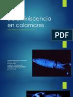 Cefalopodos.pptx