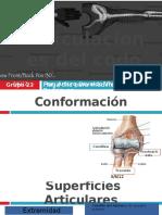 76798609-Articulaciones-Del-Codo.pdf