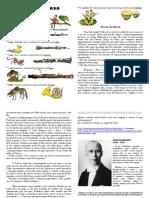 211935824-Pedro-e-o-Lobo-Ficha-Resumo.pdf