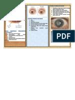 123Slide.org Leaflet Katarak.docx