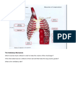 Lung A&P 3 Levels